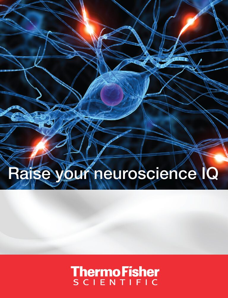 Thermo Fisher Scientific - Learn about neuroscience - game screen